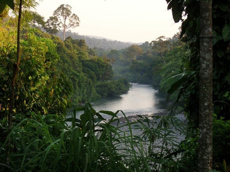 Tangkahan, la rivière