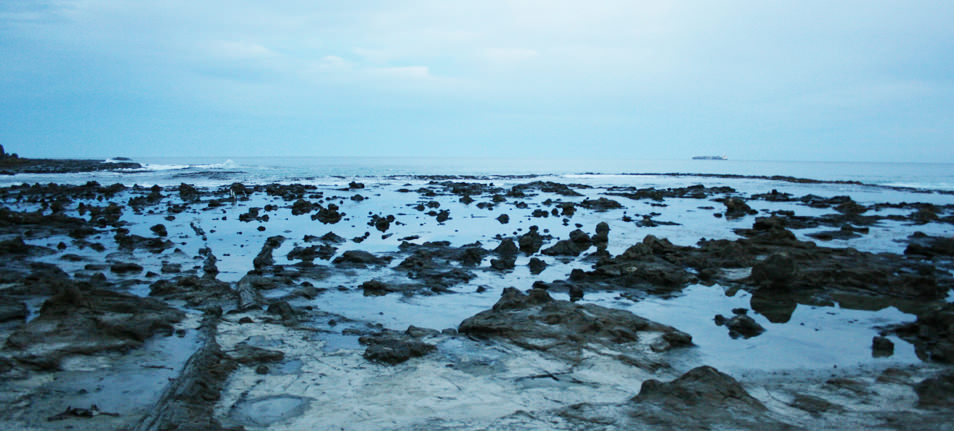 Curio Bay_Fossilized Beach