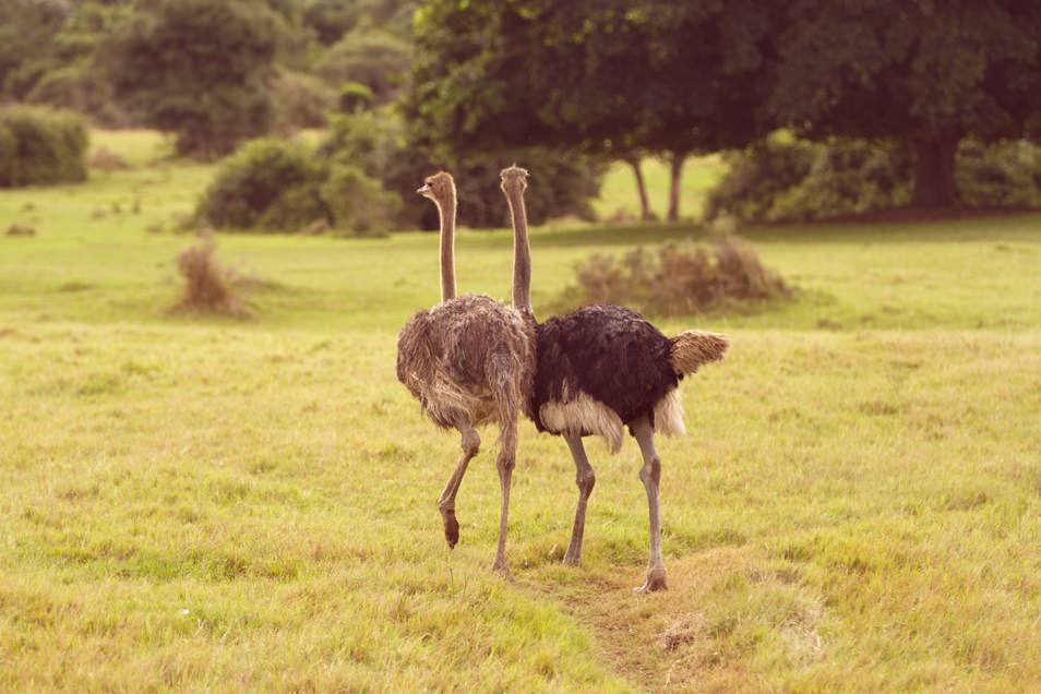 Safari Port Elisabeth