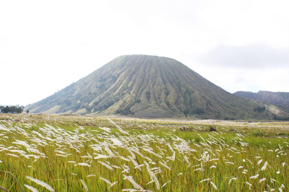 Mont Bladok, Java