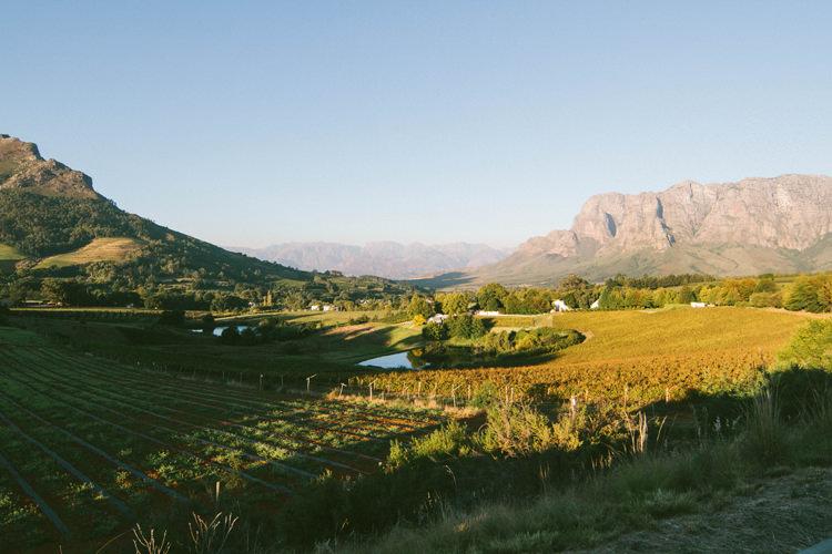 Vignobles du Cap, Afrique du Sud