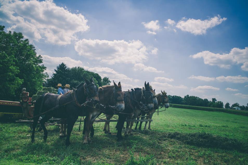 Pays amish, Pennsylvanie