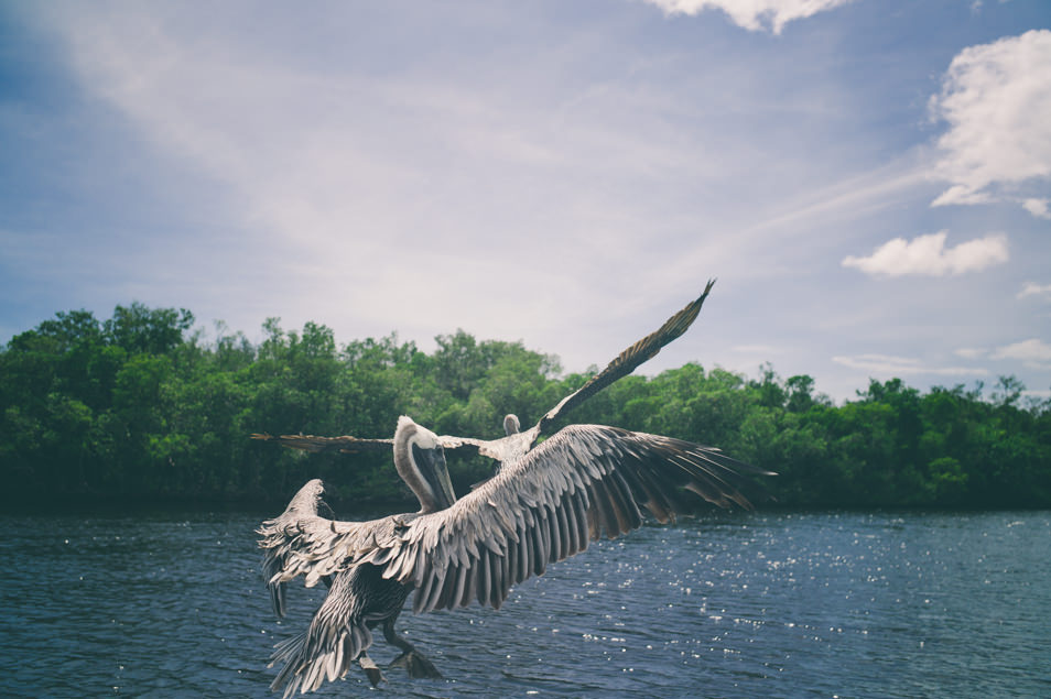 Airboat, Everglades