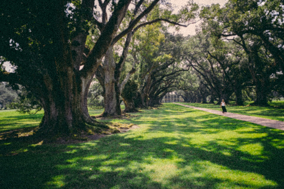 Plantation Oak Alley, Louisiane