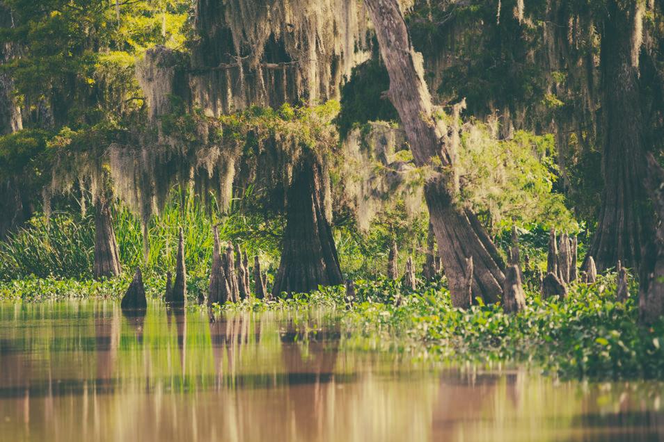 Atchafalaya, Bayou, Louisiane