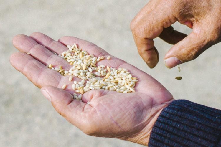Riz du Delta de L'Ebre, Polet