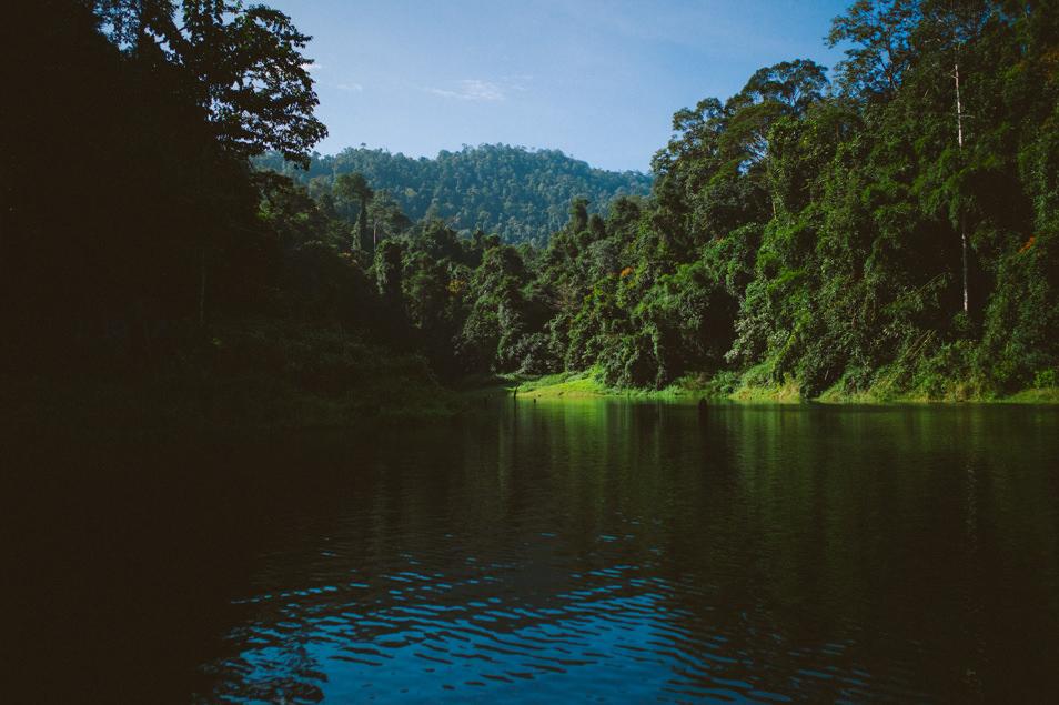 Jungle de Belum, Malaisie