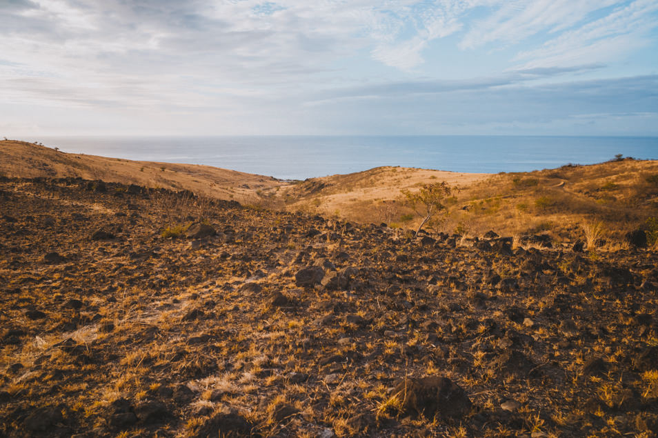 La savane, La Réunion