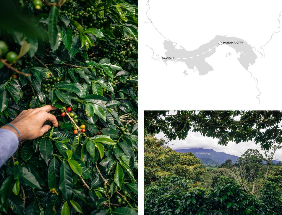 Photos du Panama - Boquete, Finca Lerida