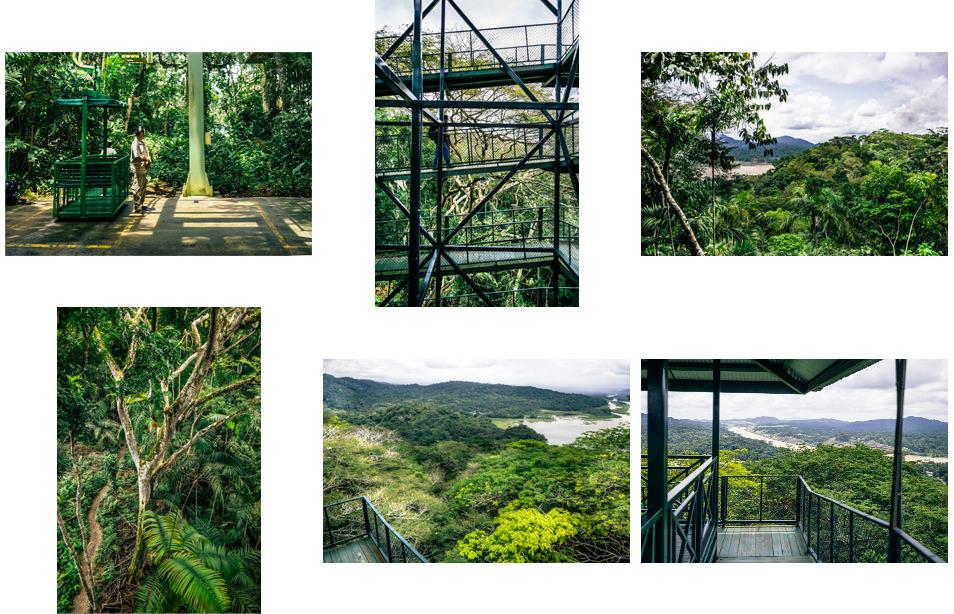 Photos du Panama - Jungle et canopée Gamboa
