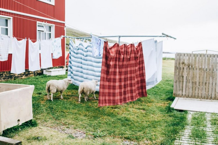 Voyage en Islande - Linge