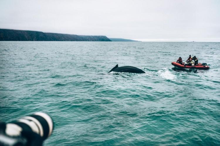 Voyage en Islande - Baleines