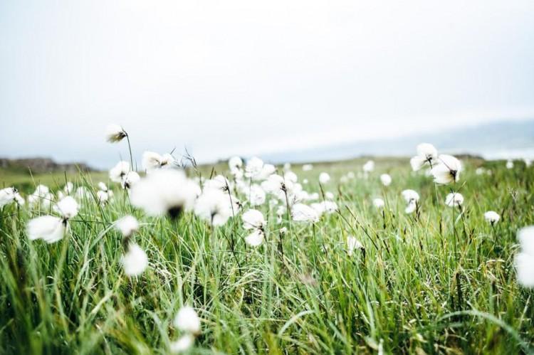 Voyage en Islande - Nature