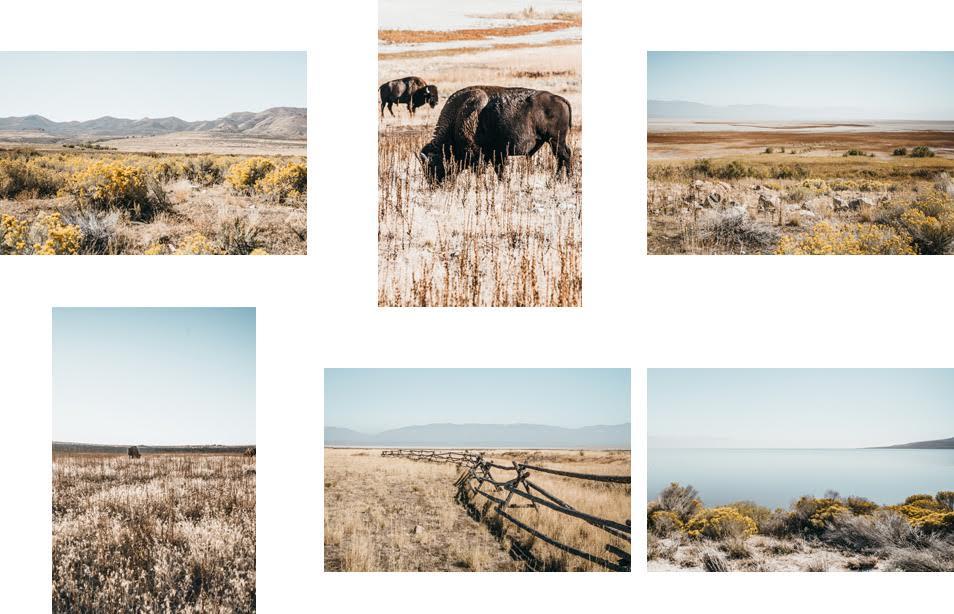 Road trip dans l'Ouest Americain - Antelope Island, Utah