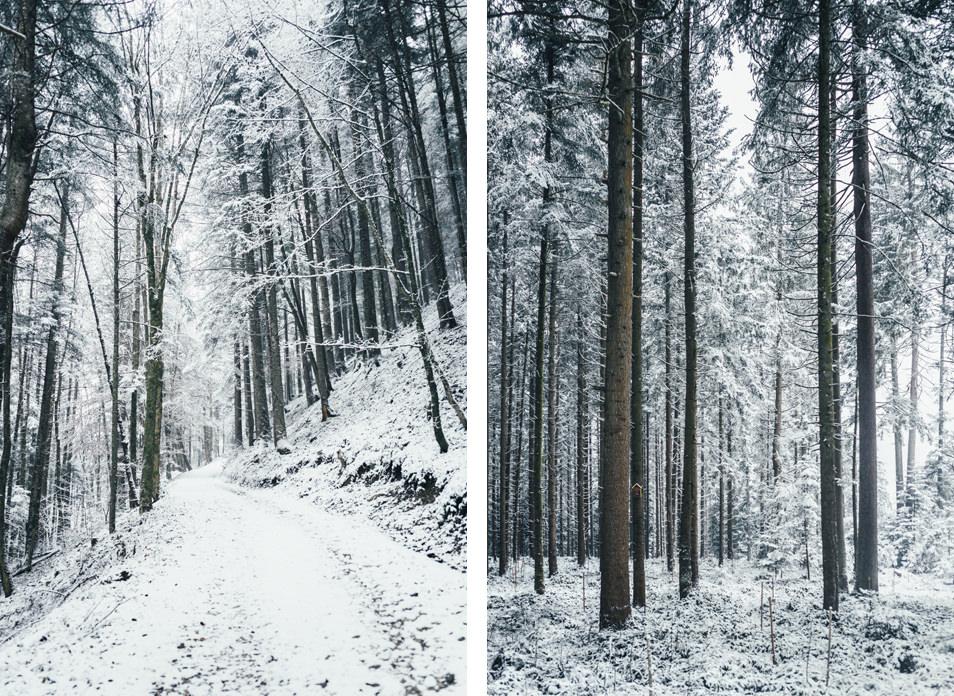 Forêt du Tyrol, Autriche