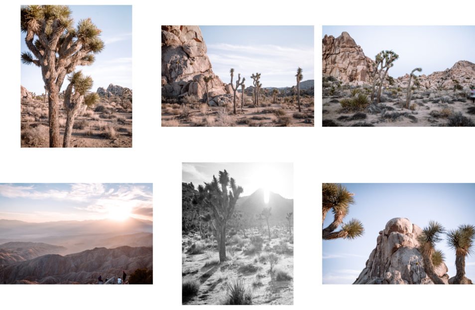 Blog Voyage Itinéraires Road Trip Etats-Unis USA Californie Palm Springs Joshua Tree National Park